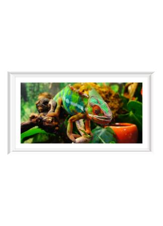 PosterPrint Colorful chameleon