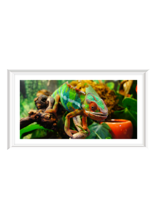 PosterPrint Colorful chameleon