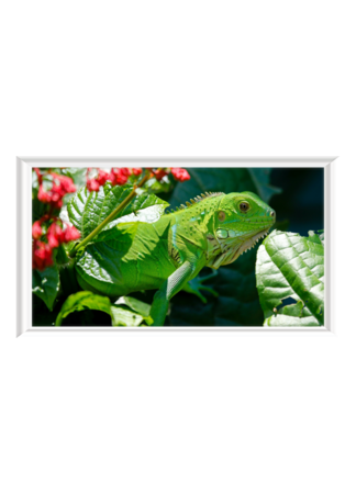 PosterPrint Chameleon green camouflaged