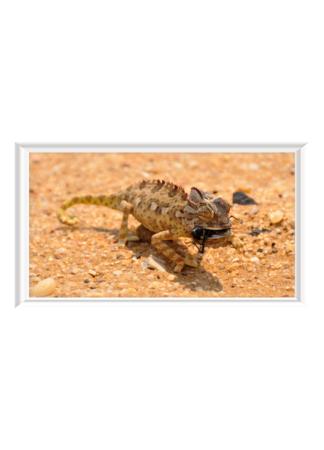 PosterPrint Chameleon with prey