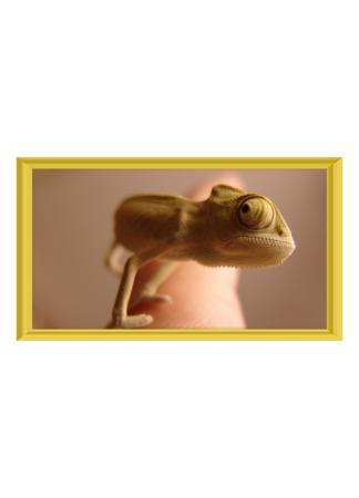 PosterPrint Chameleon on the finger
