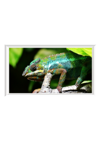 PosterPrint Chamäleon grün-blau im Baum