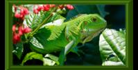 Cham5-green